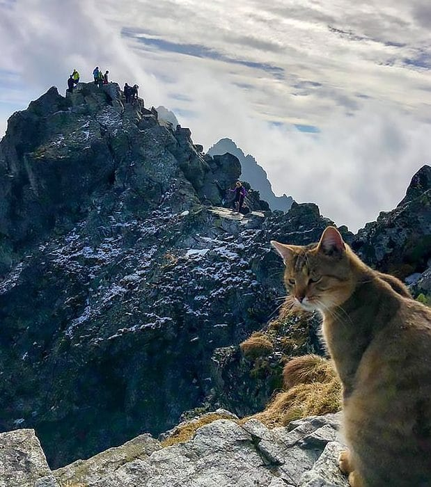 Откуда взялся кот на высоте 2,5 тысячи метров? Он был невозмутим, увидев альпиниста…