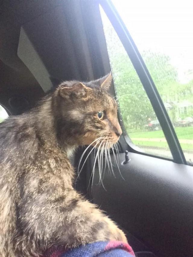 15-летний бродячий кот наконец дождался «своего человека», который взял его к себе. Трогательная история....