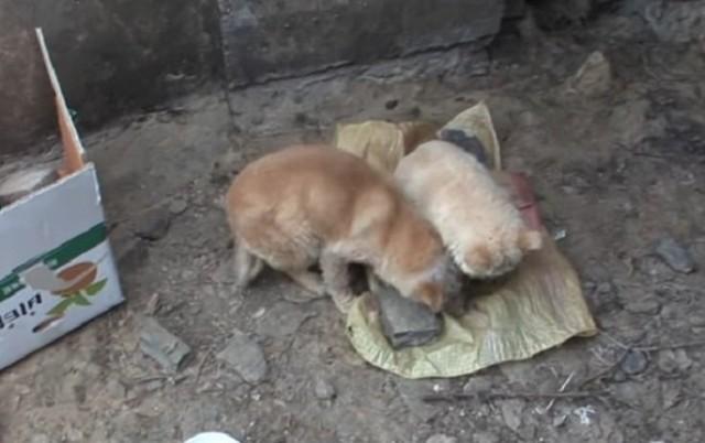 Две больные собачки шокировали своим видом… С ними была еще и третья, вот только выйти к людям она не могла…