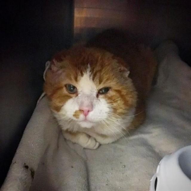 Кот сидел на пороге и просил о помощи, он надеялся, что его накормят