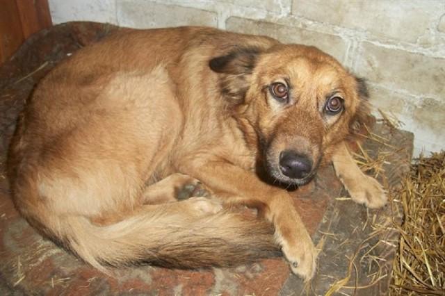 """""""До свидания, Маруся!"""" Хозяева помахали ей руками и уехали. А собака осталась голодать у дверей бывшего дома!"""