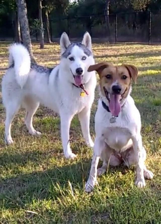 «Я выбираю тебя!»: собака убежала из семьи, чтобы быть рядом со спасшим ее человеком!