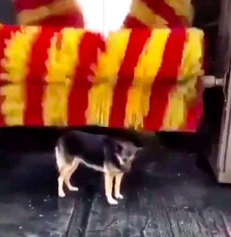 Видео: Собака часто приходит на автомойку, но не за тем, чтобы её накормили, а за массажем!