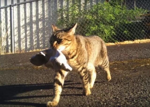 Хозяйственный кот Серёга