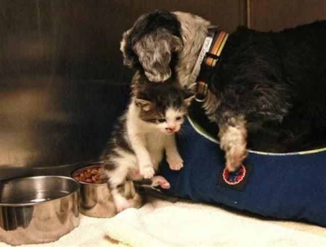 Собака кормила своим молоком и защищала котенка, брошенного на дне глубокого оврага