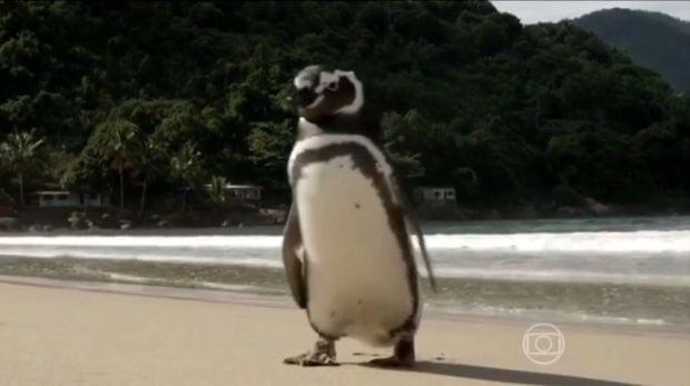 Каждый год этот пингвин проплывает более 8000 км. Он спешит проведать того, кто спас его 5 лет назад! Видео!