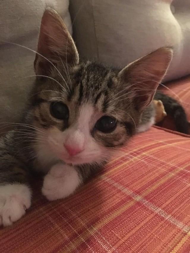 Видео: Умирающий котенок вслепую полз навстречу девушке. Врач предложил усыпить кроху, но спасительница отказалась