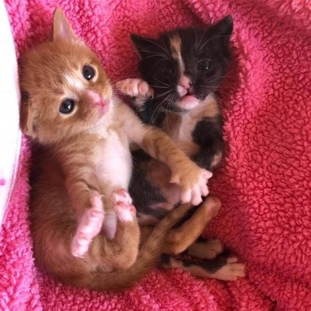 Котята несколько дней выживали на улице в обнимку, пока не подоспела помощь