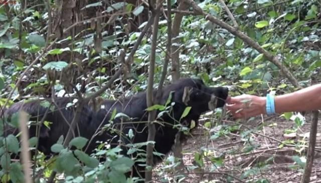 Собака пряталась в лесной чаще и боялась выйти к людям. А ведь она нуждалась в помощи…