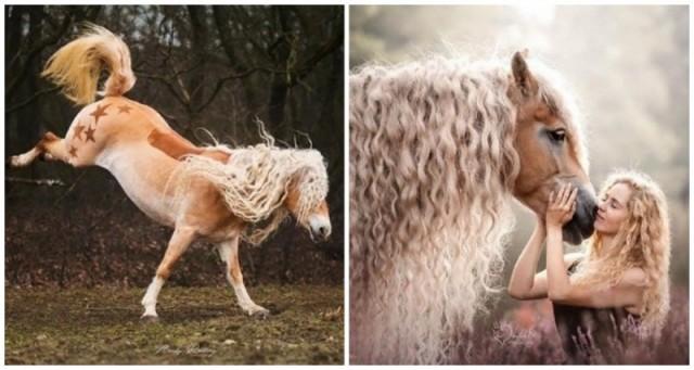 В Голландии живет лошадь из волшебной сказки (8фото)