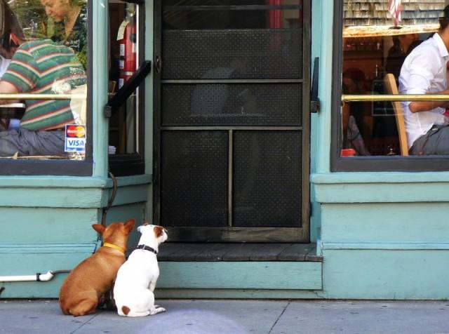 Эксперимент показал, знает ли собака, когда хозяин вернется домой