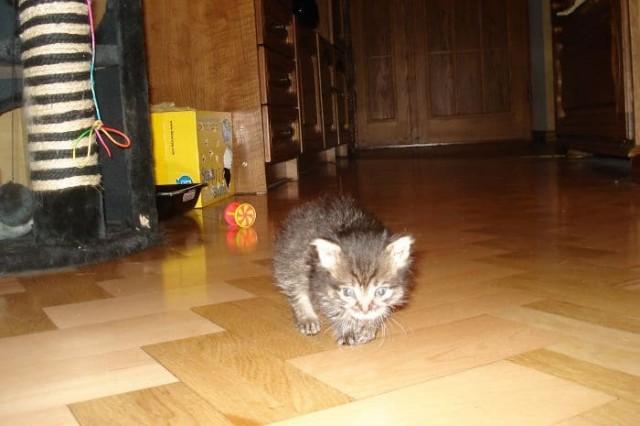 Из школьного подвала послышался жалобный плач… Девочка нашла там застрявшего слепого котенка!