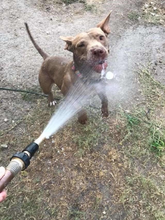 «Одинокая душа»: два года собака ждет новых хозяев, но люди просто не замечают ее…