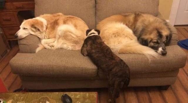 Среди спасенных собак оказалась одна, которая убежала. Ее доверие никому не удавалось завоевать…