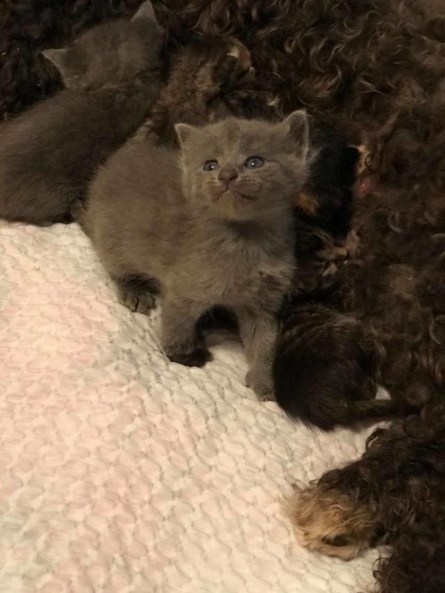 Котята нуждались в маме, но рядом оказалась только милая собачка с тяжелой судьбой…