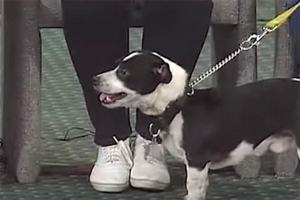 Спустя 14 часов после похорон собаки, хозяева обнаружили её стоящей под дверью