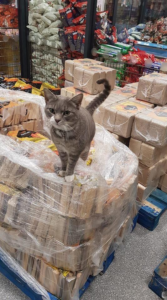Супруги потеряли кота и уже не надеялись его найти. Оказалось, всё это время он был звездой местного супермаркета