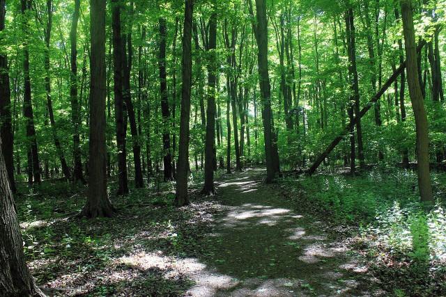 Видео: Мужчина находит удобное место в лесу, чтобы пообедать – через секунду его окружают со всех сторон