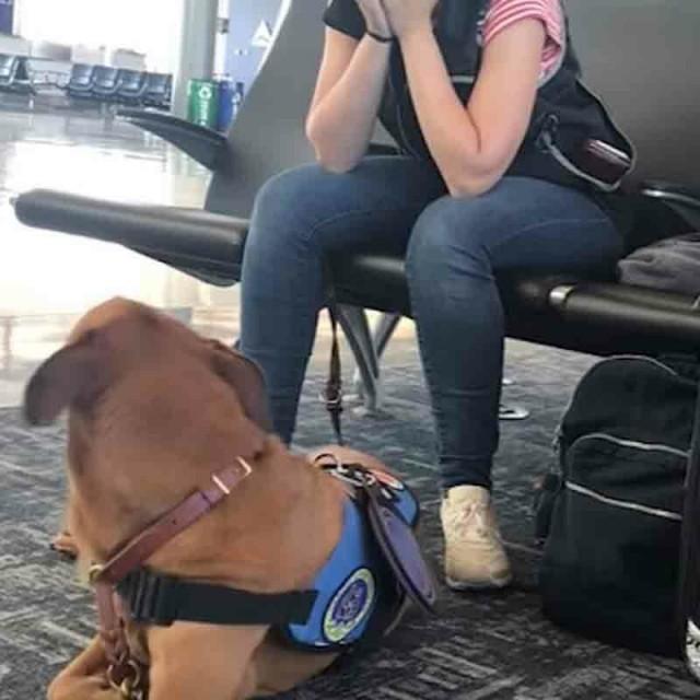 Собака видит, как её хозяйка начинает дрожать – затем на Видео камеру попадает потрясающая реакция животного