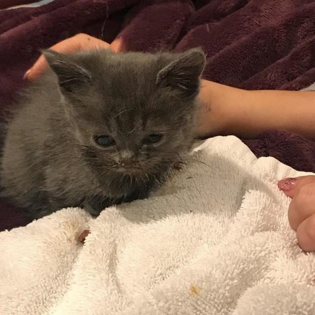 Хрупкий котенок со скрученными лапками был на волоске от усыпления! Но в его судьбу вмешались…Видео!