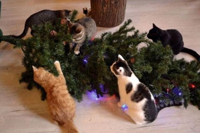 Ёлкопад начинается! Коты отжигают так, что впору вызывать пожарных