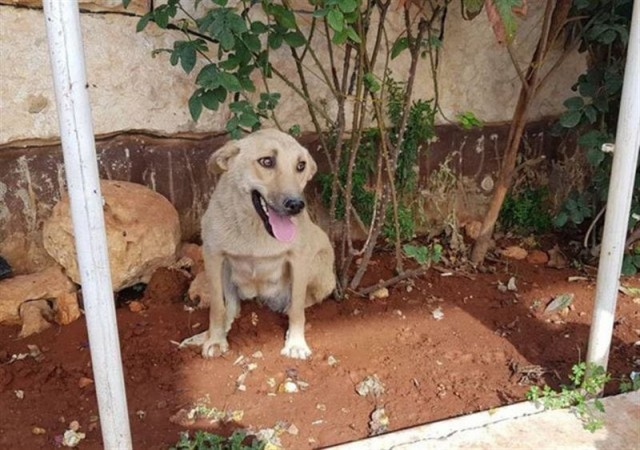 Котёнок-сирота подружился с собакой, потерявшей щенков, и это так трогательно, что готовьте платочки