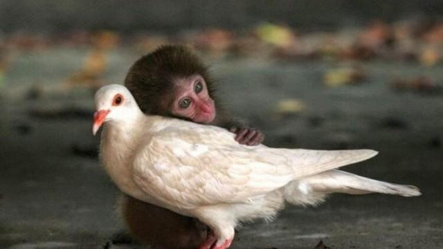 Потрясающие 21 Фото удивительной дружбы животных разных видов. Это так мило!