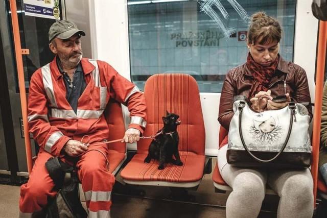 Развесёлые коты и собаки, которые странно себя ведут: 15 позитивных Фото...