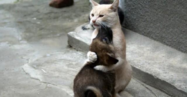 Кот по прозвищу Папа Тереза.