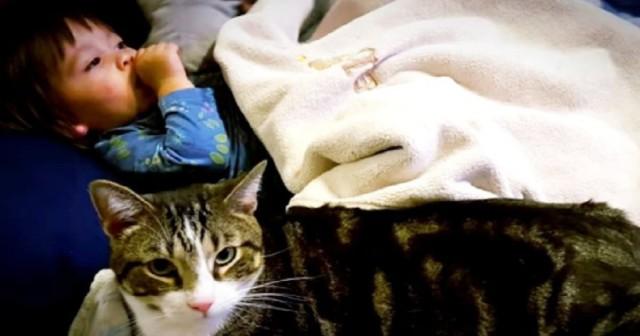 «Он повел меня в комнату к дочке»: Кот, которого должны были усыпить в приюте, спас ребенку жизнь