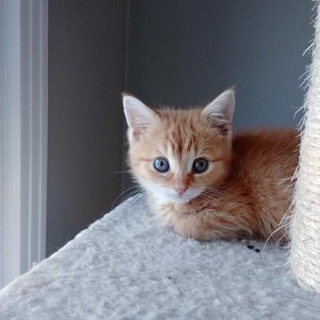 «Лола бы не пережила зиму!»: беспомощный котенок оказался на холодной улице в полном одиночестве…