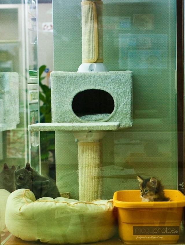 Больше не продаются! Теперь в Великобритании можно брать котят и щенков только у заводчиков или в приютах!