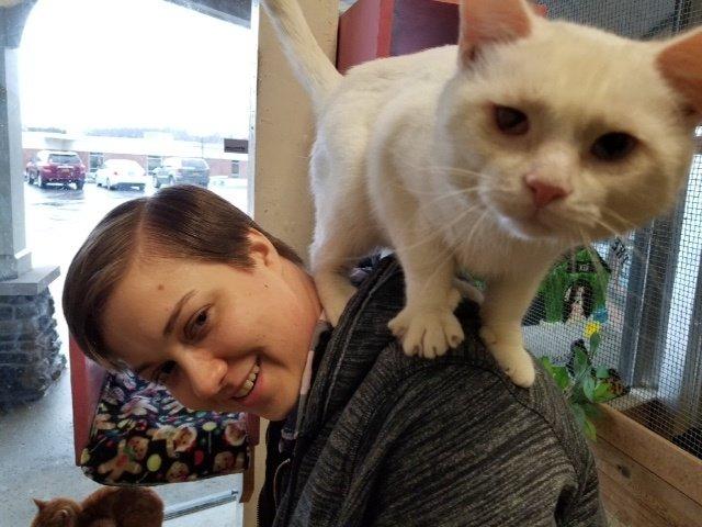 «Выбери меня!» Приютский кот запрыгнул на плечи парню, чтобы именно его забрали домой!Видео!
