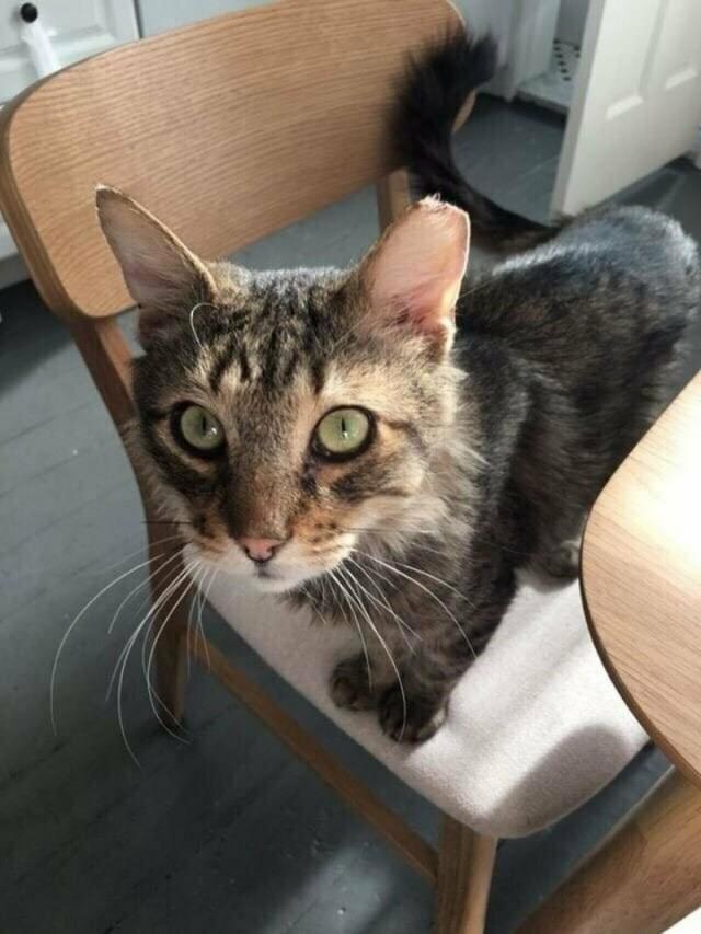 Бродячий кот подошёл к девушке-волонтёру и дал понять, что больше не хочет жить на улице. Видео!