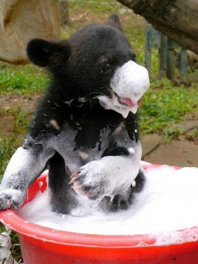 Купающиеся животные, вид которых гарантировано вызовет улыбку на лице - 23 смешных Фото!