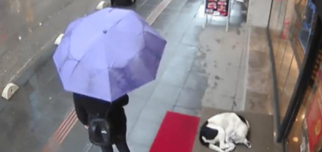 Видео: Девушка думала, что её никто не видит, когда накрыла дворнягу своим шарфом