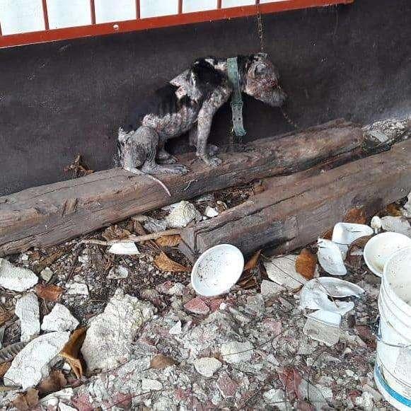 Голодающий пес прислонялся мордой к короткой цепи, чтобы поспать… Он бегал за курицей, за что и был наказан