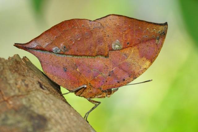 Видео: Обычный листик вдруг превратился в прекрасную бабочку