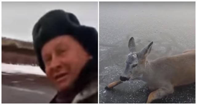 Видео: Неравнодушный рыбак спас косулю с замёрзшего озера