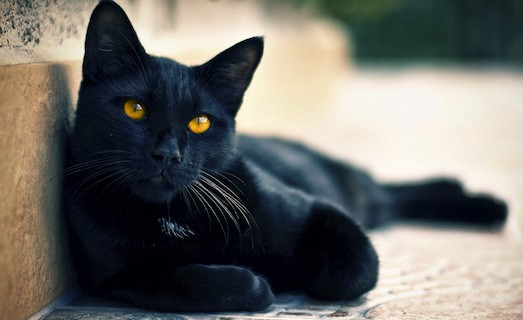 Почему не стоит бояться черных кошек?