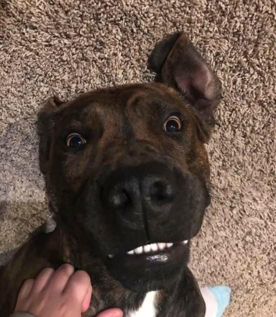 Видео: Девушка не сдержала слёз, когда родители подарили ей приютского пса, за которым она ухаживала