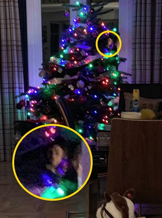 Призрак спрятался за рождественской елью