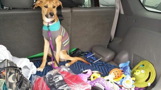 Переезжая к бойфренду, девушка выбросила свою собаку в мусорный контейнер