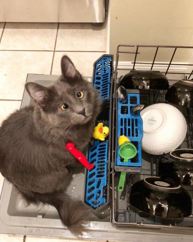 Кот сопровождает хозяйку даже в душ в благодарность за то, что она забрала его из приюта