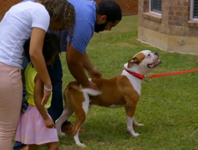Найденный под палящим солнцем, пес сидел без воды и еды, хотя у него был хозяин, который не хотел бросать его вот так