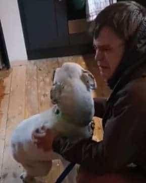 «Я так скучал по тебе!» Бездомный мужчина плакал и крепко обнимал потерявшуюся собаку. Видео встречи!