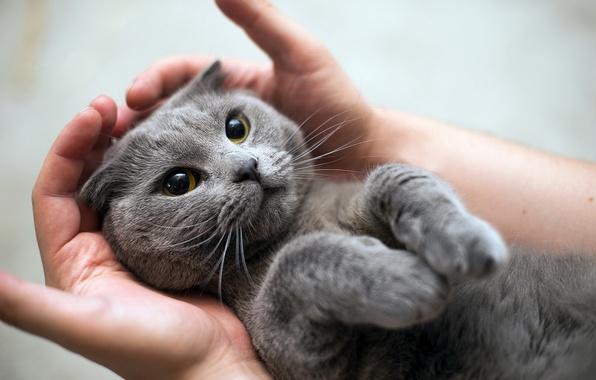 Как кошки просятся на руки - Видео!