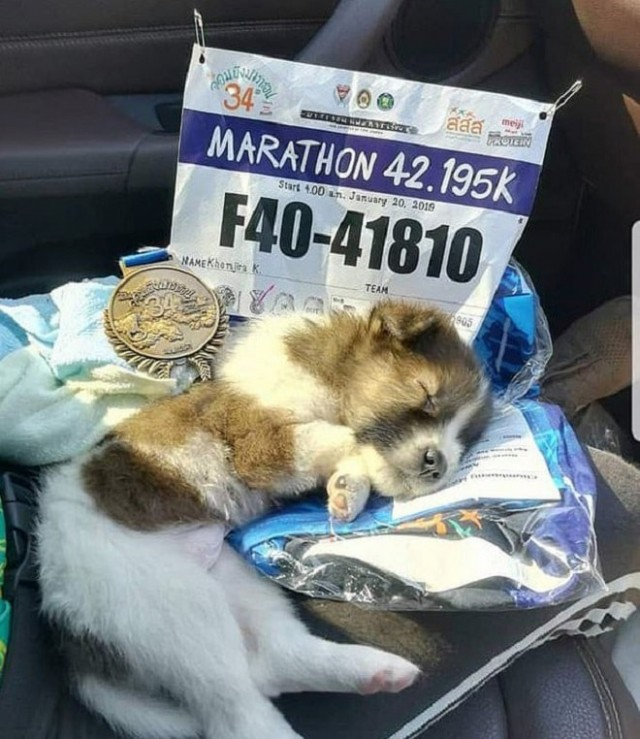 «Побежали вместе?»: Участница марафона подхватила бездомного щенка, выскочившего на дорогу