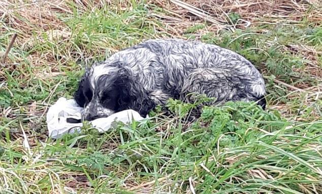 Мужчина спас собаку, которая держала пакет в зубах. Когда он заглянул внутрь, то чуть не расплакался!