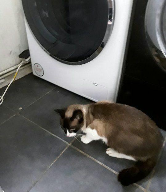 Женщина запустила стиралку с котом внутри. Он выжил, но долго не забудет последствия головокружительного трипа